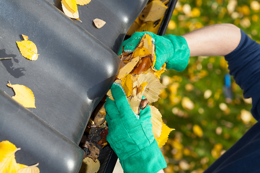 autumn cleaning and rubbish removal